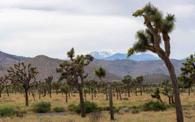 Wat te doen in Joshua Tree National Park? De leukste tips + bezienswaardigheden