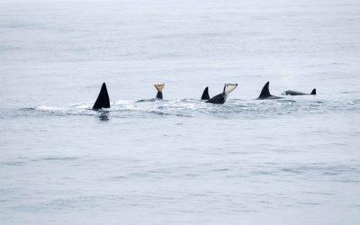 Doen: walvissen spotten bij de Highway 1 in Amerika