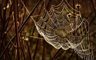 Reizen met een spinnenangst