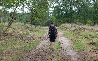 Wandelen in Nationaal Park Dwingelderveld: de beste tips + mooiste plekken!