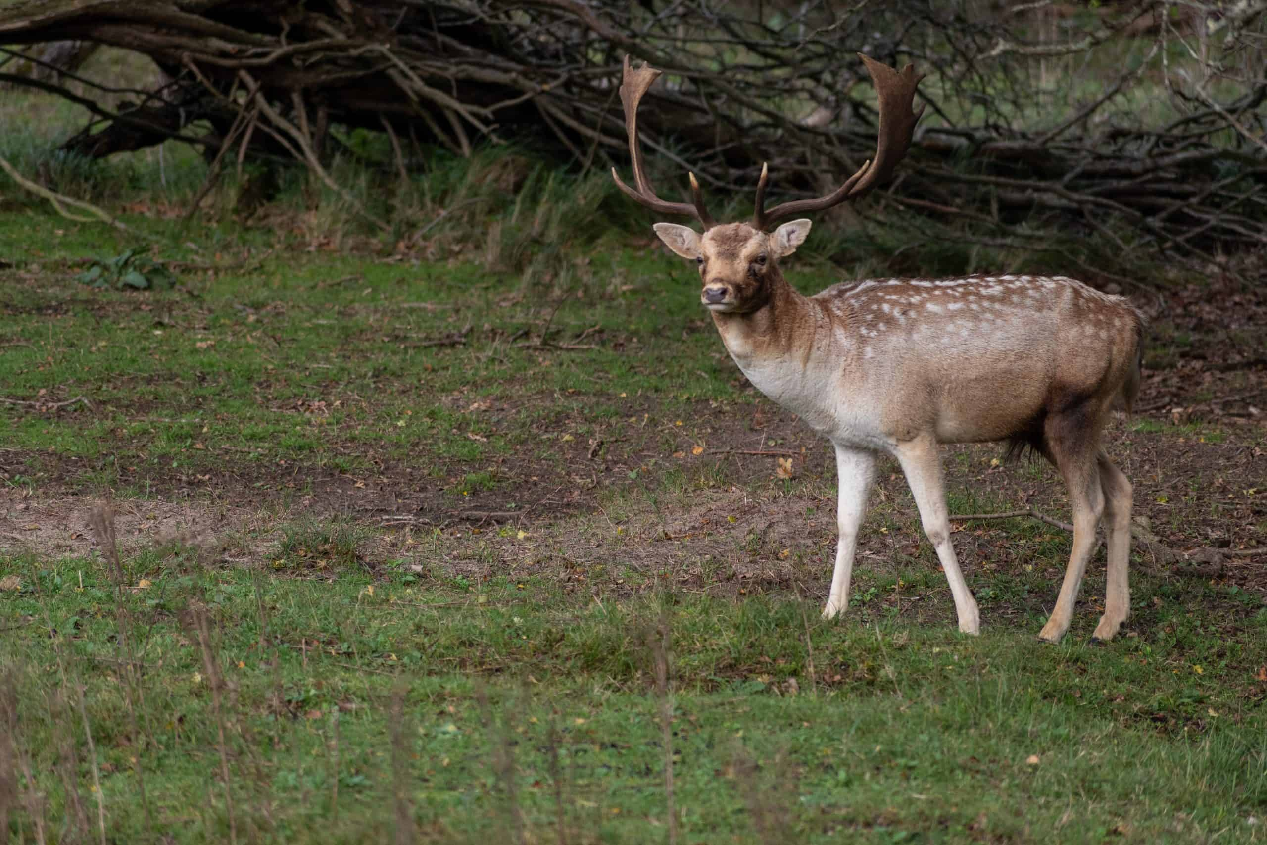 Wildlife in de Amsterdamse waterleidingduinen