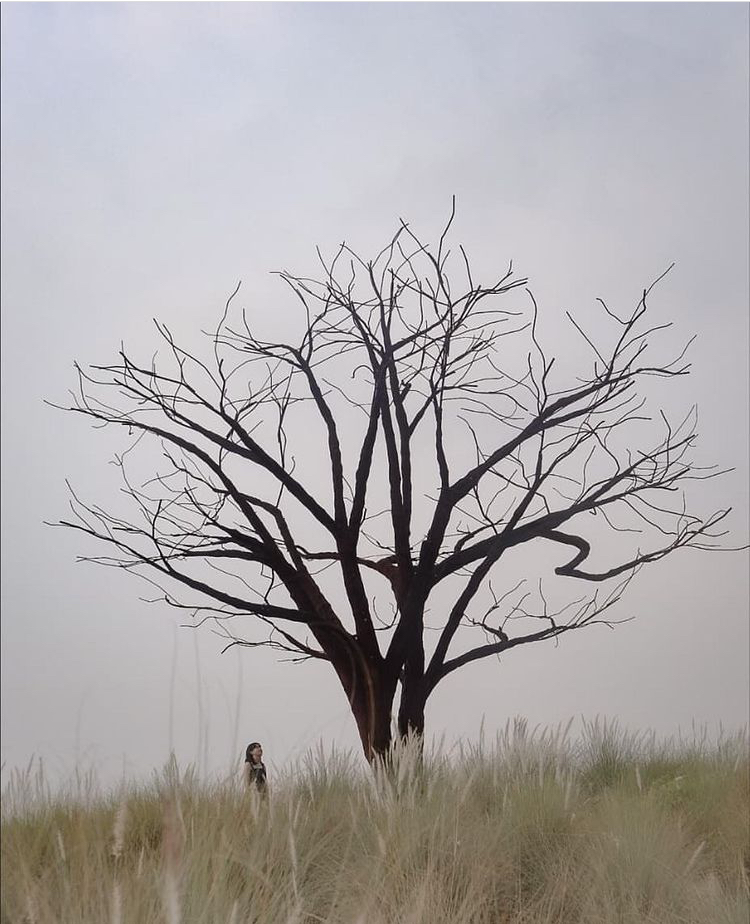 Tree amidst grasslands