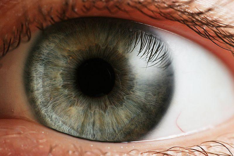 800px-Eye_iris.jpg