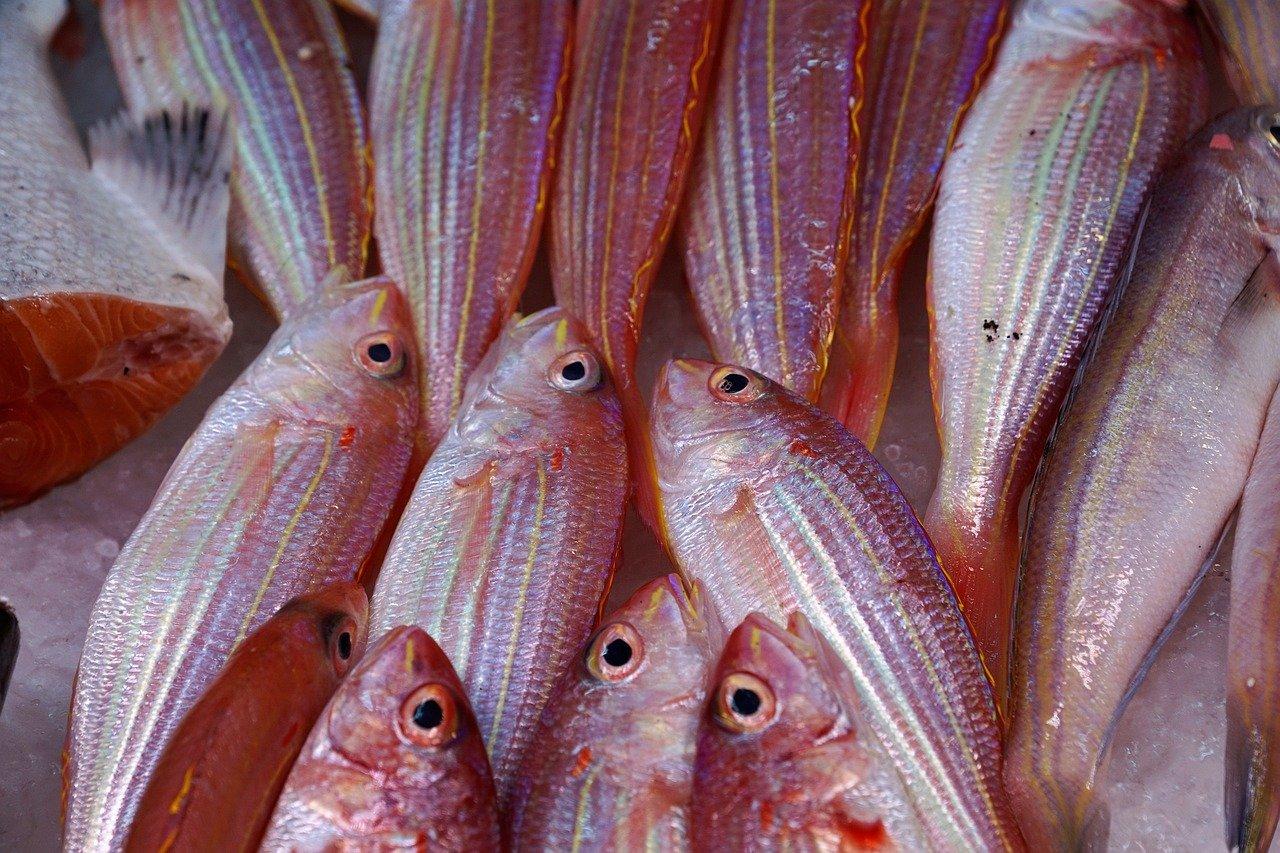 fish-nutrition-b12-weight-loss.jpeg