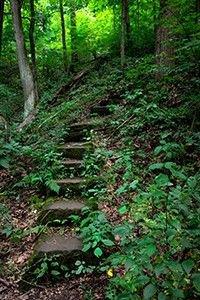b2ap3_large_woods_steps_blog_Yxpahd9.jpeg (b2ap3_large_woods_steps_blog.webp)