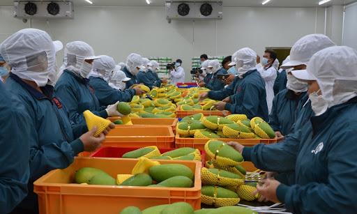 EVFTA được coi là cơ hội để nông sản Việt liên kết sâu rộng vào thị trường lớn, có giá bán cao, nhưng cũng là thách thức đòi hỏi sản xuất nông nghiệp trong nước cần phải thay đổi mạnh mẽ hơn nữa.
