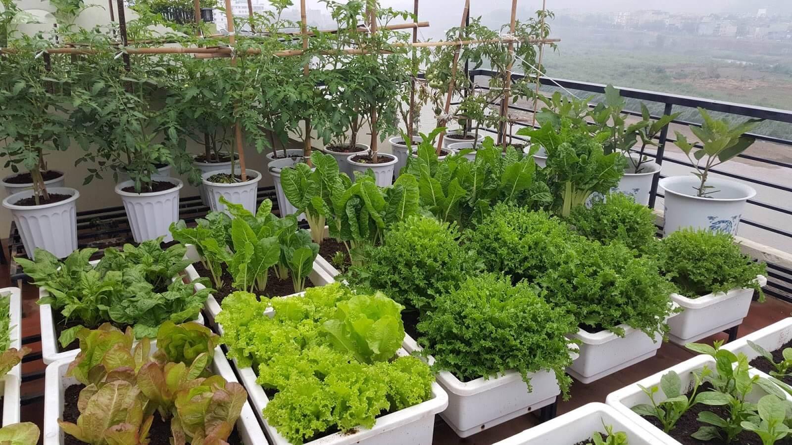Cửa hàng bán hạt giống đắt hàng nhờ xu hướng trồng rau tại nhà trong thời kỳ giãn cách