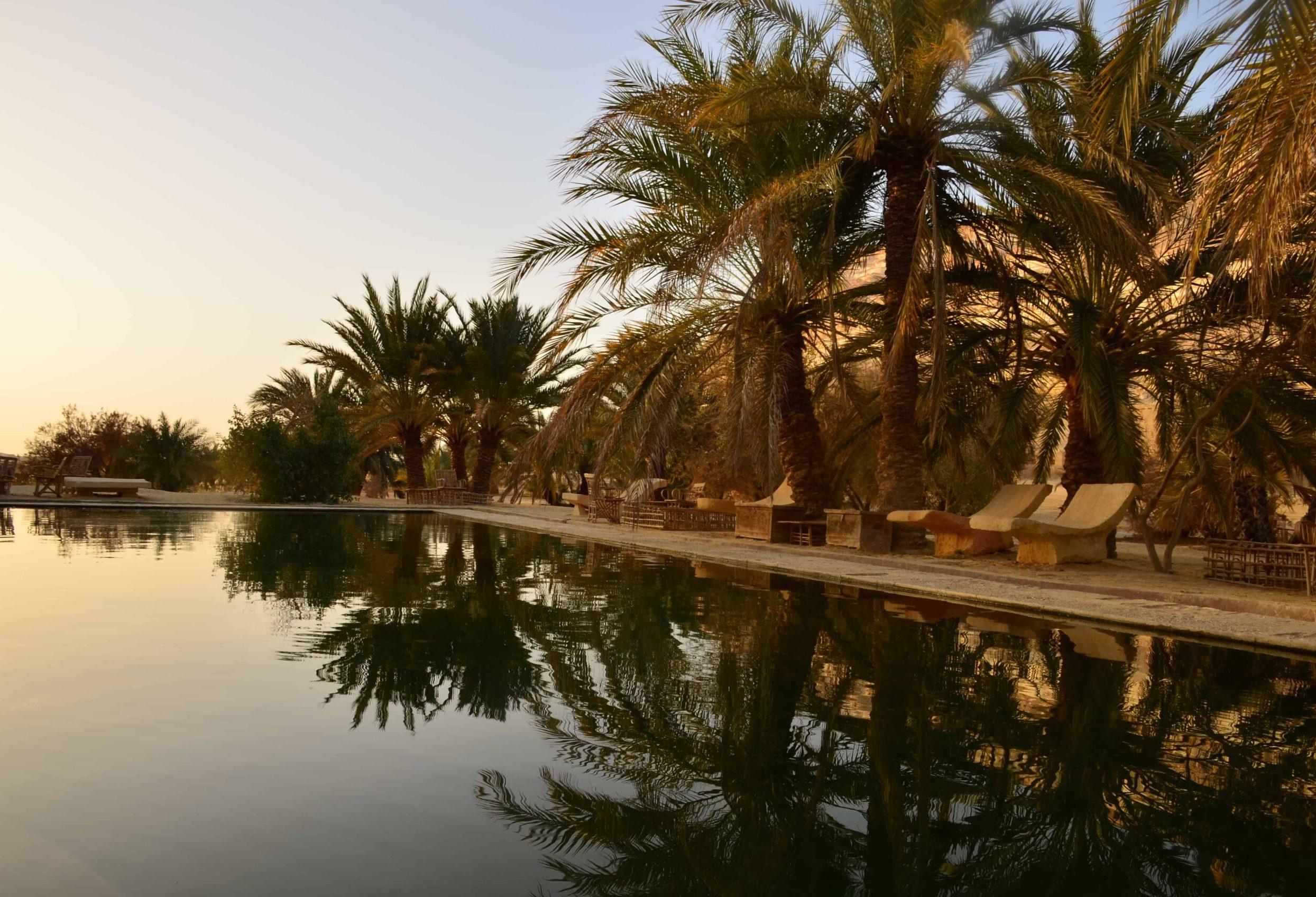 Oasis in Siwa