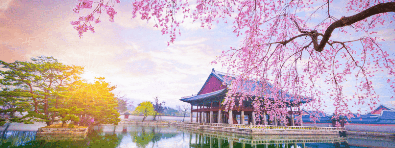 gyeongbokgung palace in Seoul overlooking a sunny day