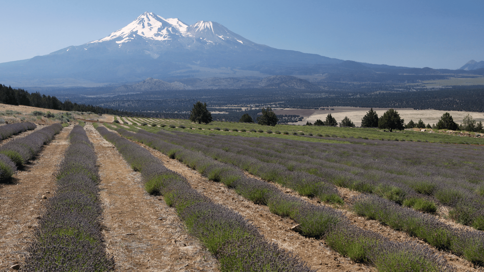 A sunny day in Mount Shasta
