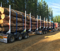TractionAir Forestry