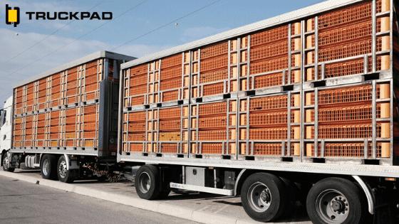 transporte-de-carga-viva