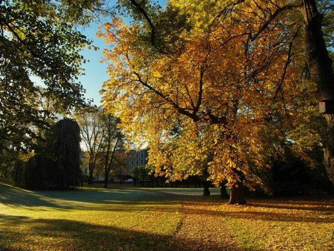 Autumn foliage in Queen's Park in Oslo