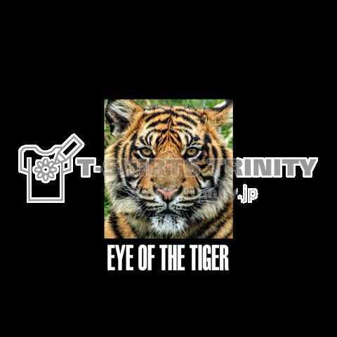 EYE OF THE TIGER 虎の瞳 とら 虎 タイガー