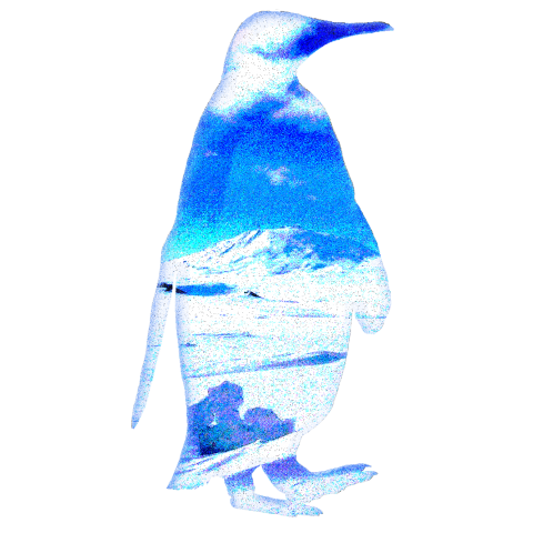 SO COOL PENGUIN