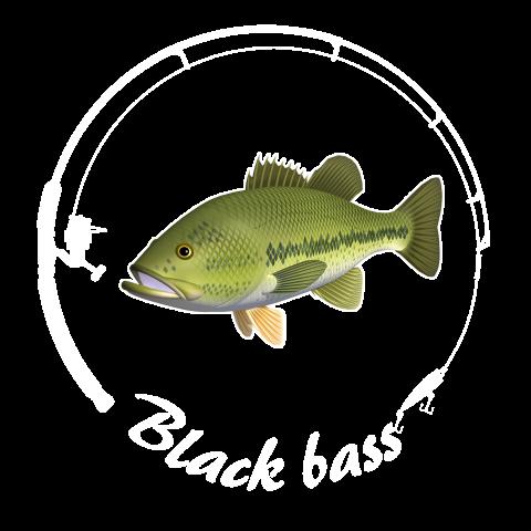 BLACK BASS_C7