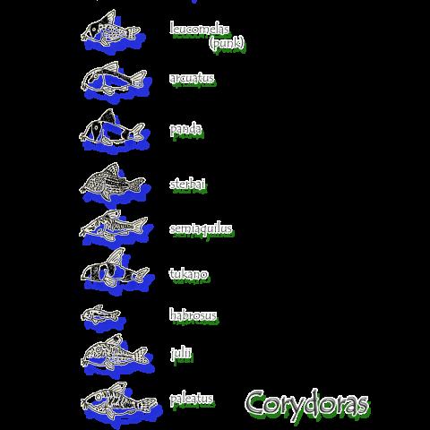 コリドラス大集合 -Corydoras-