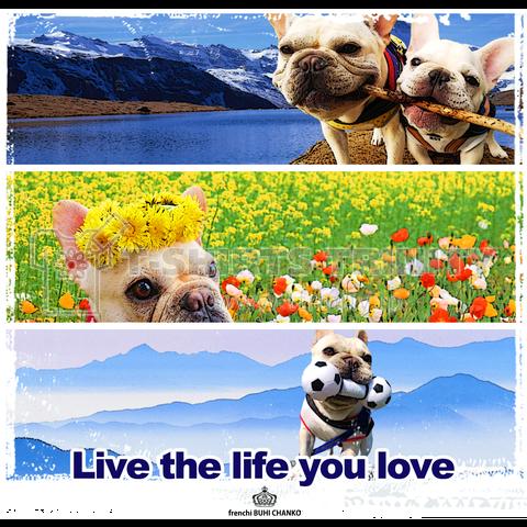 Live the life you love/毎日が冒険編(トート)