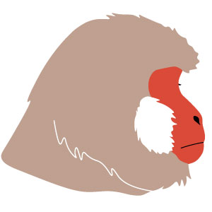The Japanese Monkey