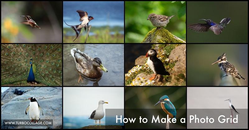 Make Photo Grid