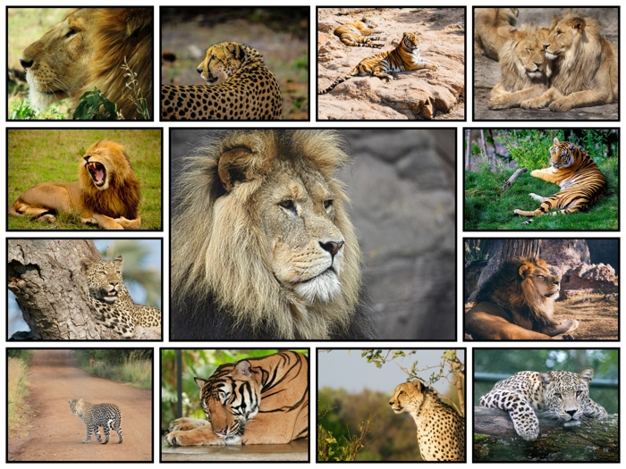 Make a Photo Collage with a Large Center Picture