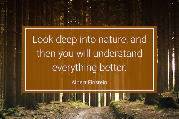 Einstein Nature Quote