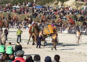Head to the camel wrestling championships for a unique holiday experience