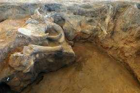 Bull head installation discovered in Catalhoyuk, one of the oldest human settlements