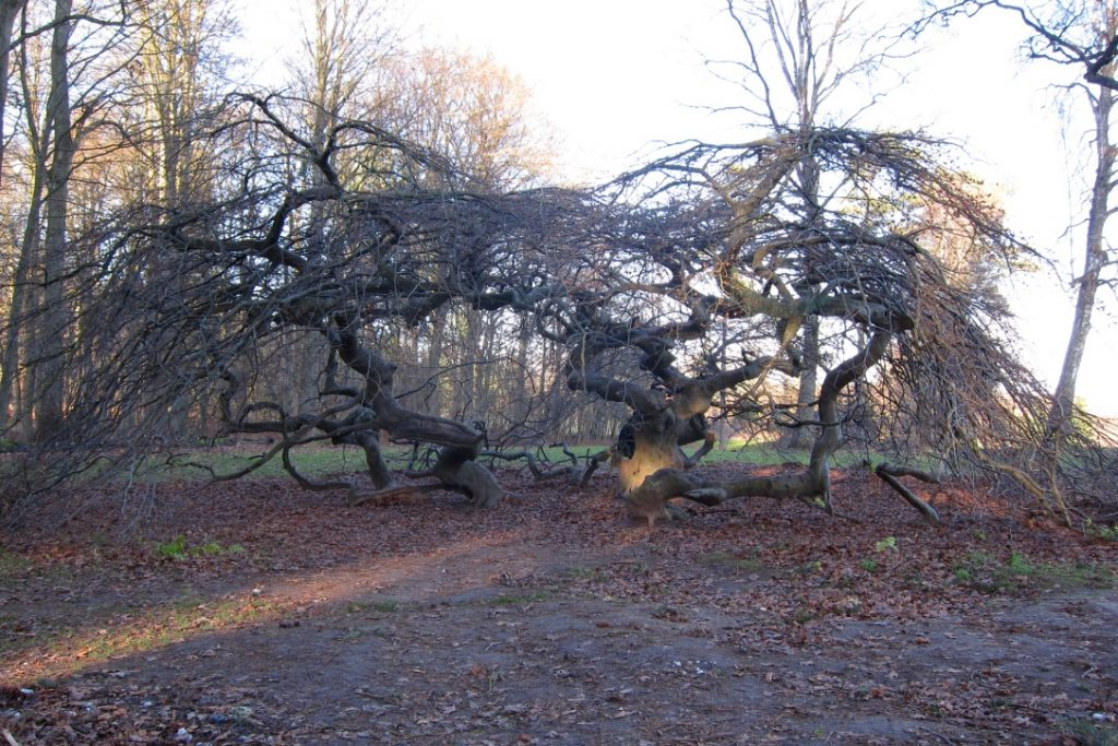 Puut ja pensaat suojaavat paahteelta. Ne voivat myös toimia piilopaikkana leikeissä tai tarjota tarpeen mukaan rauhoittumispaikan.