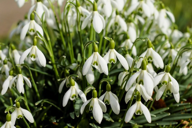 A Beginners Guide To Winter Flowering Plants Urban Clarity