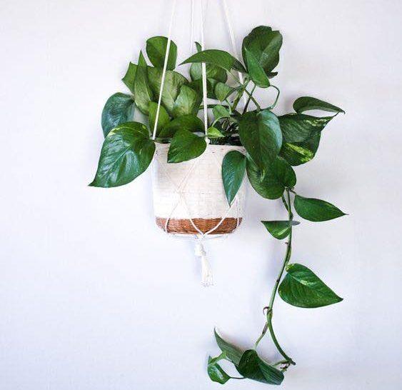 4 plantes vertes pour purifier la maison blog urban massage. Black Bedroom Furniture Sets. Home Design Ideas
