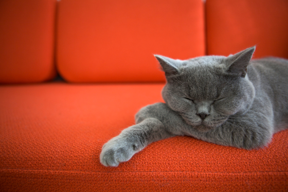 This week's hot topics - from cat mortgages to wills
