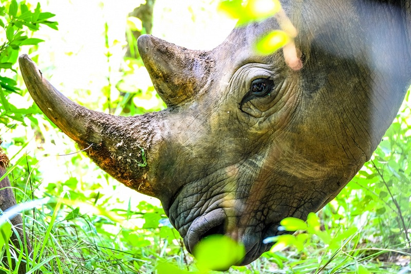Rhino bond a milestone in ethical investing