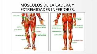 musculos de las piernas inferiores
