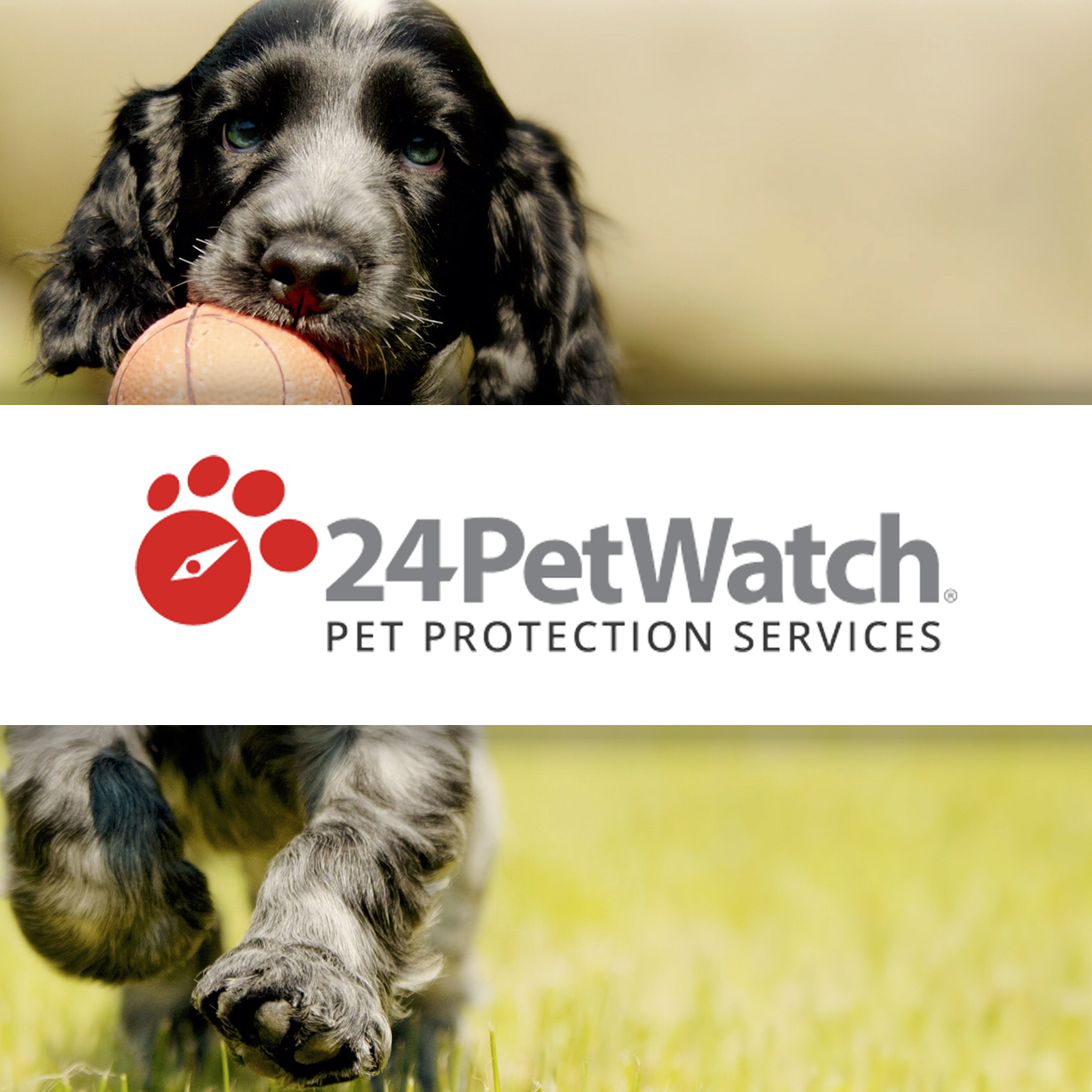 24PetWatch - Pet Protection Plan Membership Redesign