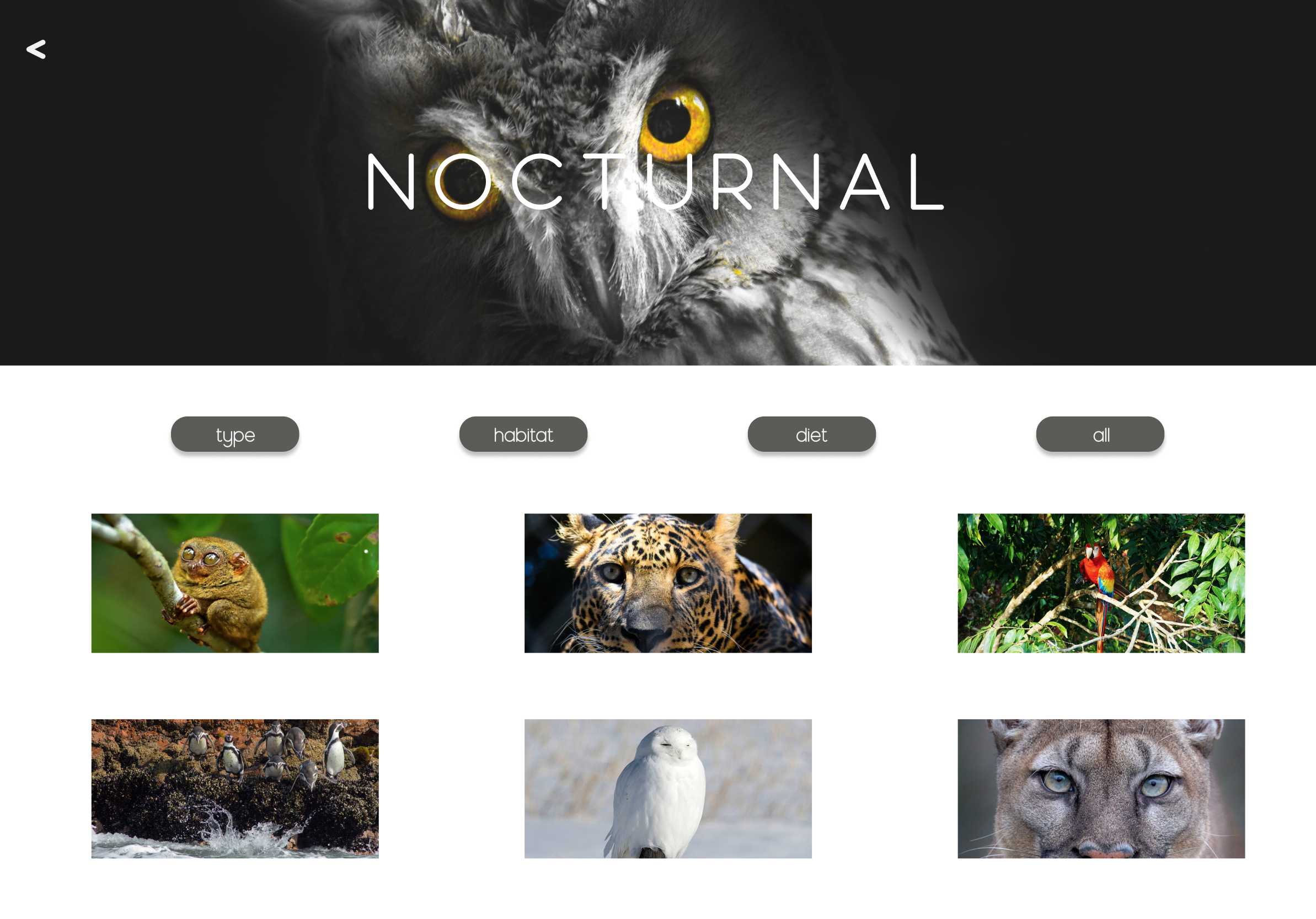 TABLET SCREEN FOR NOCTURNAL CATEGORY