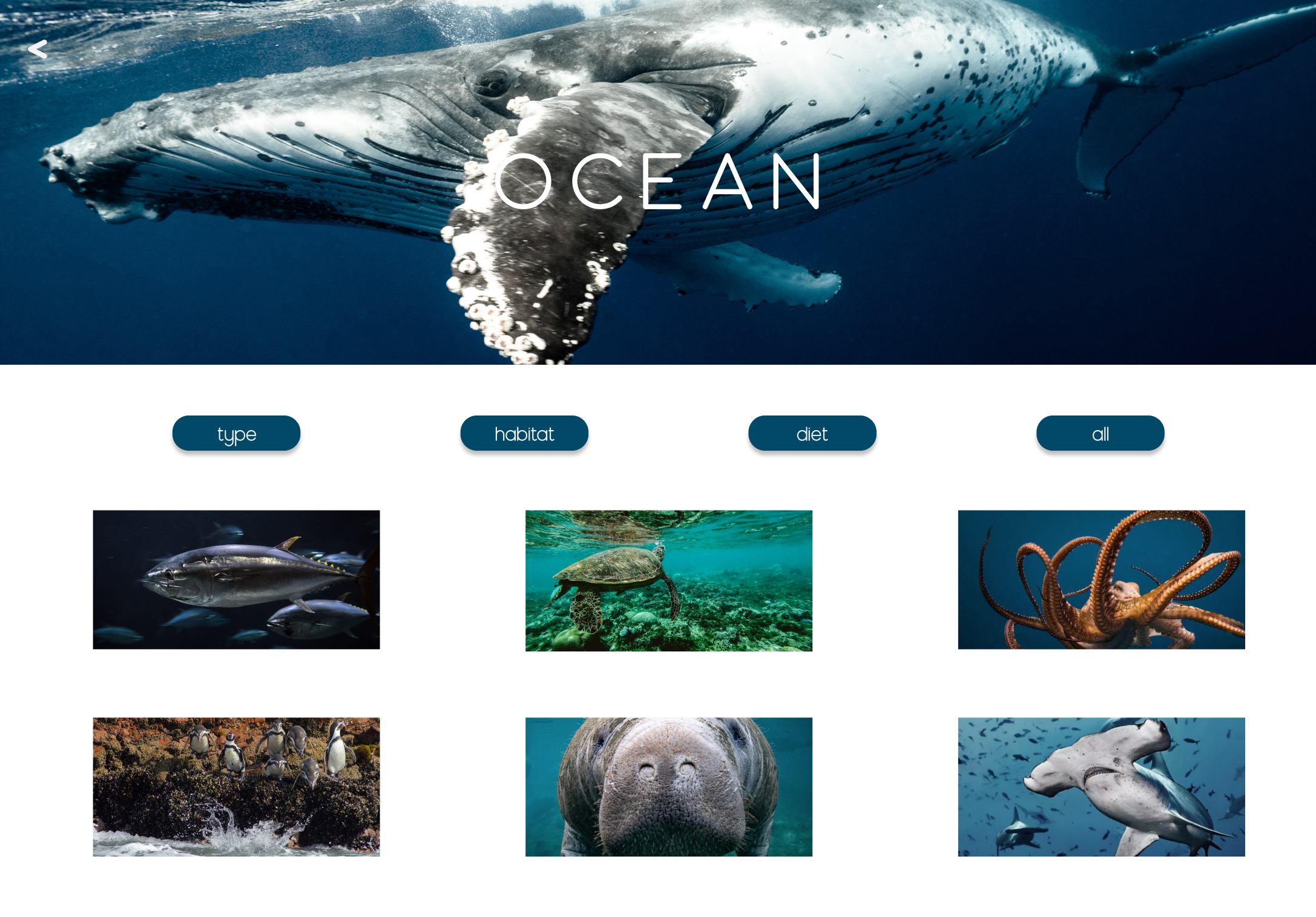 OCEAN PAGE TAKES YOU TO ENDANGERED ANIMALS IN THE OCEAN
