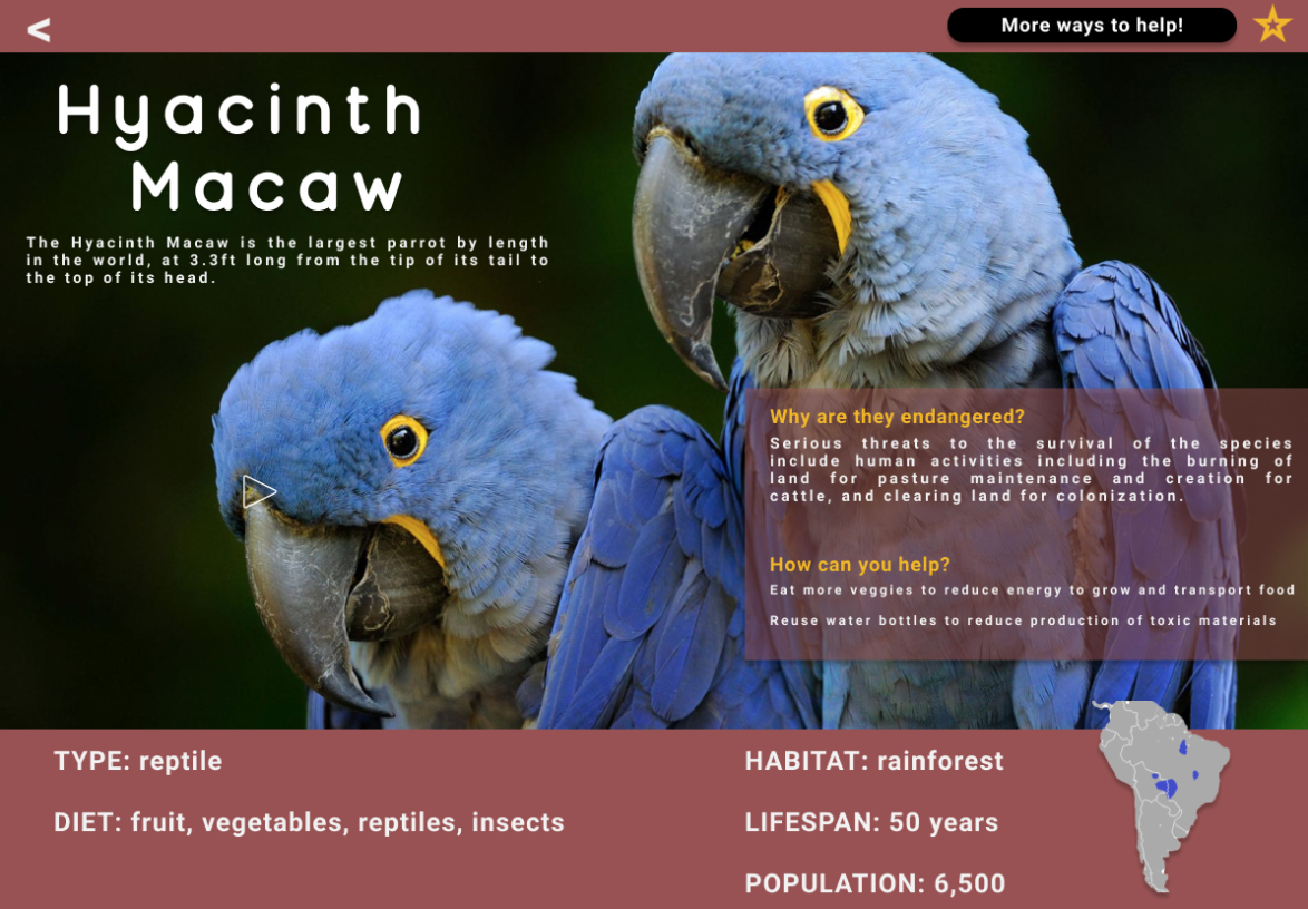 FINAL ITERATION OF HYACINCH MACAW PAGE WITH REAL LIFE UP-CLOSE IMAGE