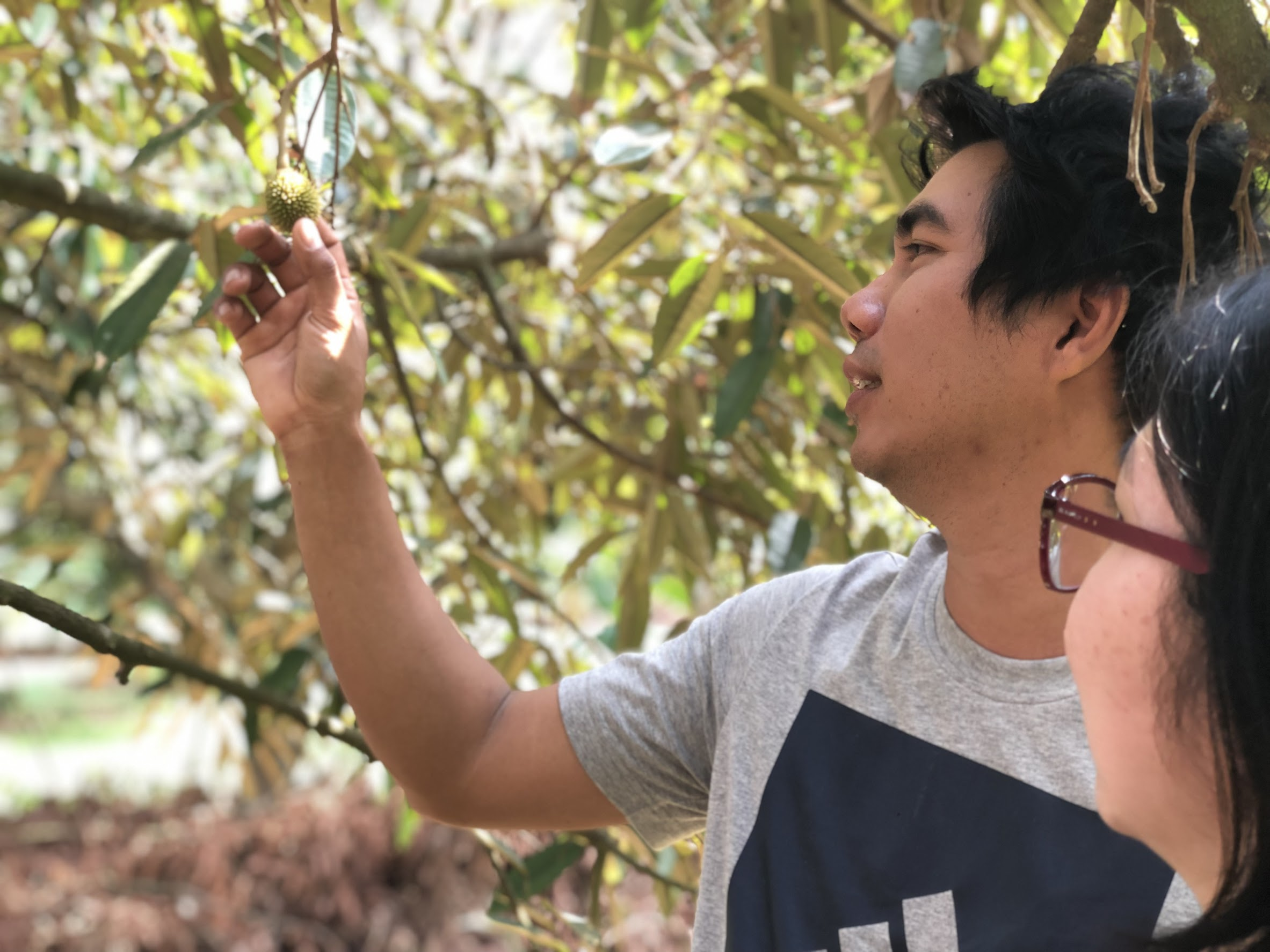 A durian farmer explaining how he keeps track of his fruit in Rayong (Thailand)