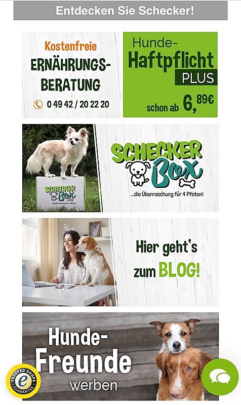 Schecker  - weiß, was Hunde wollen! 2