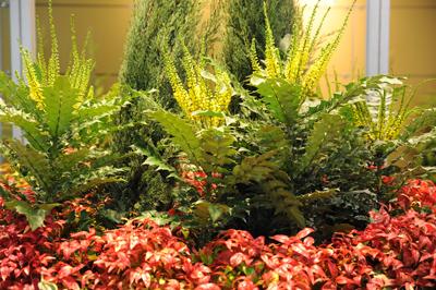 Süs bitkileri ve peyzaj sektörü 12-14 Kasım'da, Tüyap'ta bir araya geliyor.