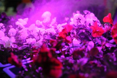 The Flower and Plant Show'un süs bitkileri ve peyzaj sektörüne sunacağı eşsiz ticaret fırsatları sizi bekliyor.