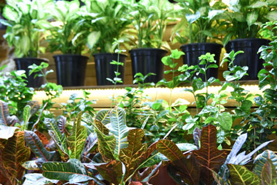 Ornamental plants and landscaping products that will create added value for new projects by construction companies will be exhibited at The Flower and Plant Show