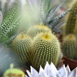The Flower and Plant Showda Sektör Trendlerini Takip Edin ve Lider Markalarla Bir Araya Gelin