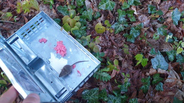 Libérer la souris capturée