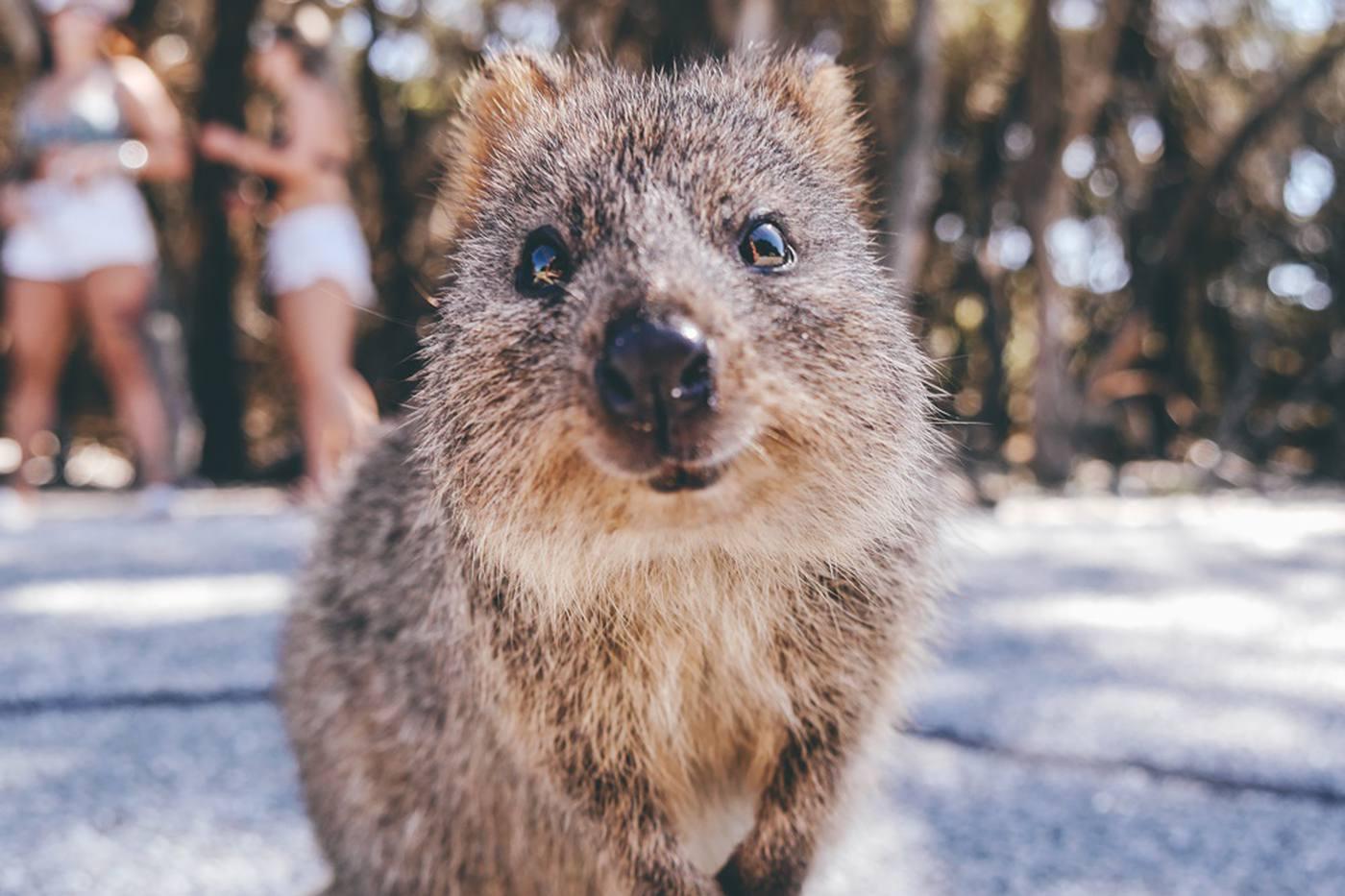 【西オーストラリア物語】幸せな動物クオッカ、神秘的なワイルドフラワーに出会う旅 image