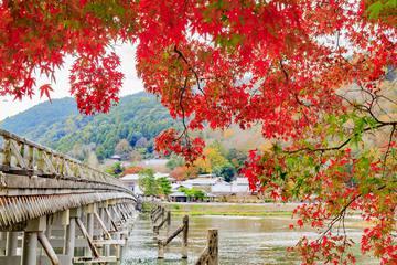 【紅葉の嵐山見どころ2021】その魅力やモデルコースまで詳しく解説
