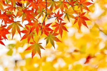 秋を感じる旅に出よう!休日に行きたい関東の紅葉名所3選