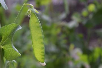 秋から冬にかけて植えればまだ間に合う!初心者向けの野菜3選のご紹介!