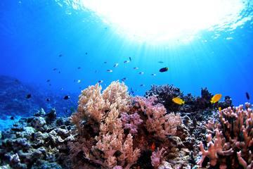 沖縄 体験ダイビングの魅力|初心者にもおすすめの人気スポット&基本情報